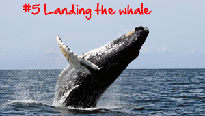 Landing the whale